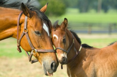 Mare with colt