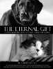 The Eternal Gift: Coping With The Grief Of Losing A Beloved Animal by Lauren McCall